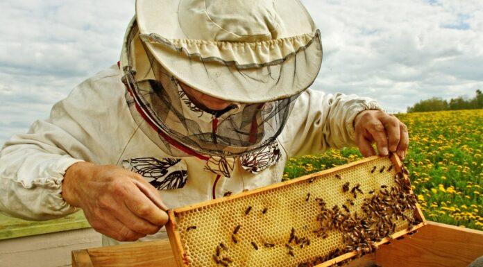 Мед проверили на безопасность