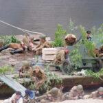 реконструкция «Пинский десант»
