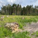 экология Коломна лес
